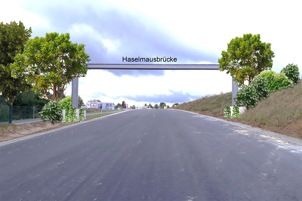 Haselmausbrücke